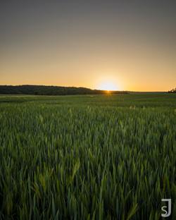 Feld im Sonnenuntergang