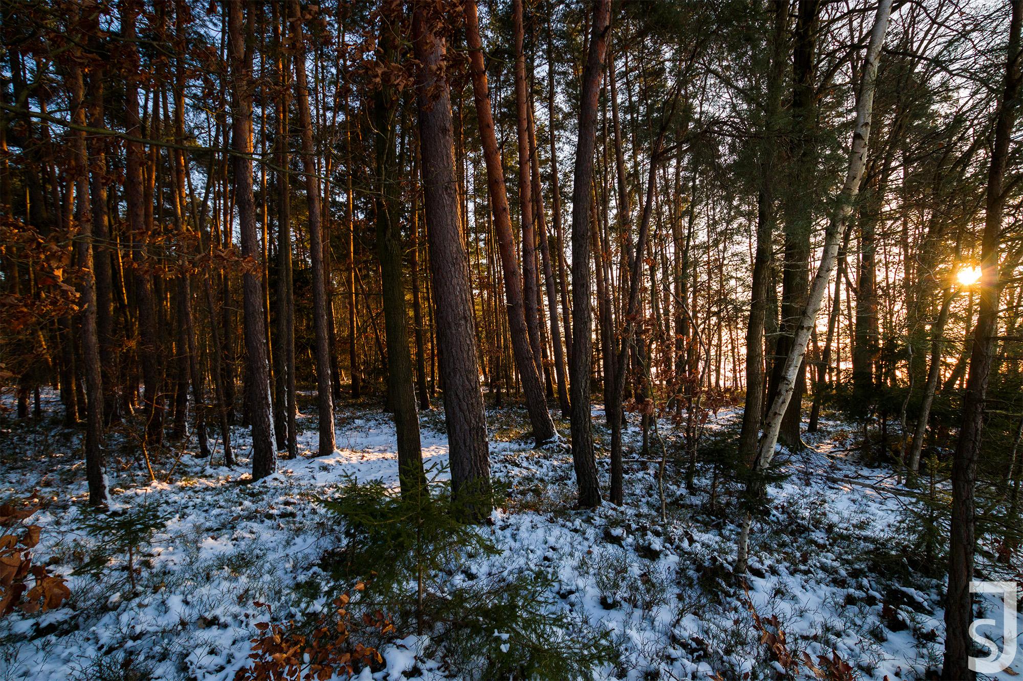 Sonnenuntergang Wald, Salzforst, Unterfranken