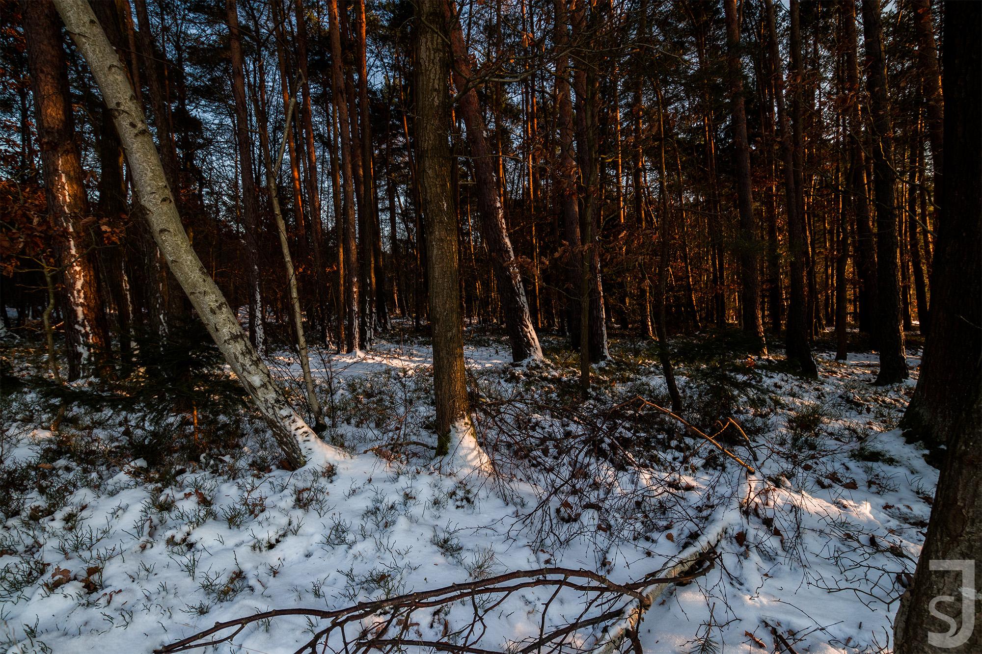 Winterwald, Unterfranken