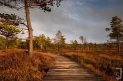 Steg_im_Herbst_(Baum),_Schwarzes_Moor,_Rhön