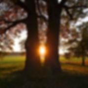 tree-3301675_1920.jpg