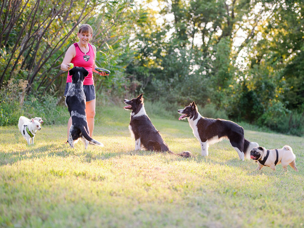 Group Dog Exercise & Play