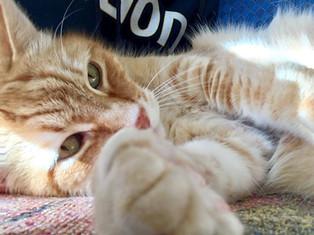 Snoozing Kitty Cat