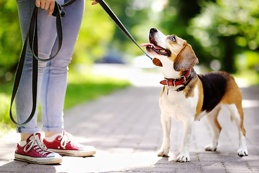 AWITP - Dog Walking.jpg