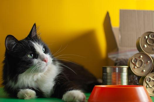 AWITP - Pet Food & Supply Delivery.jpg