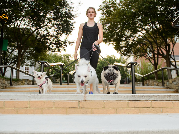 Professional Dog Walker with 3 Dogs