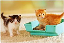 Kittens Litterbox.jfif