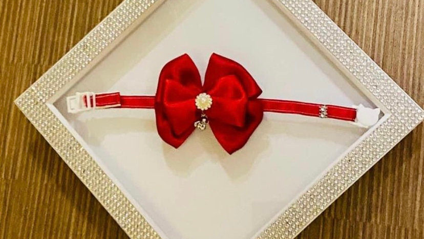Red bell cat/dog collar