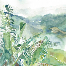 Blue Mountain Palms, Jamaica, 2018