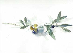 Olive Branch in California