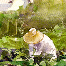 Summer Crop, Watercolor