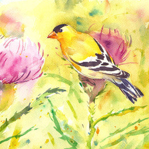 Finch and Thistle, Watercolor