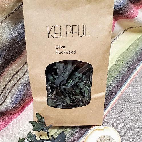 Olive Rockweed