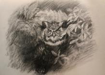 DRAWING -ANIMAL -Silent Wings.jpg