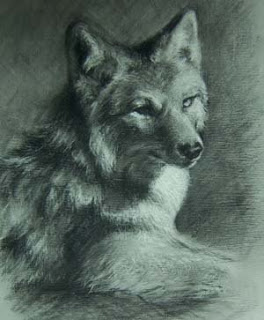 DRAWING -ANIMAL-Coyote