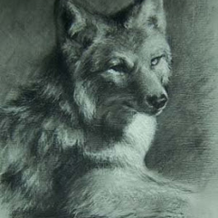 DRAWING -ANIMAL-Coyote.png