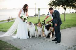 newlyweds love puppies