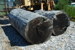 logs-for website