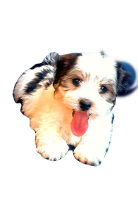 pup4_edited.png