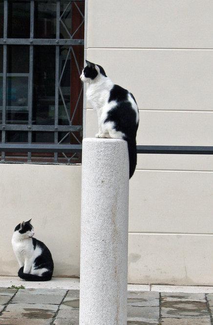 bw_cats_fotografia_alicjaprusek.jpg
