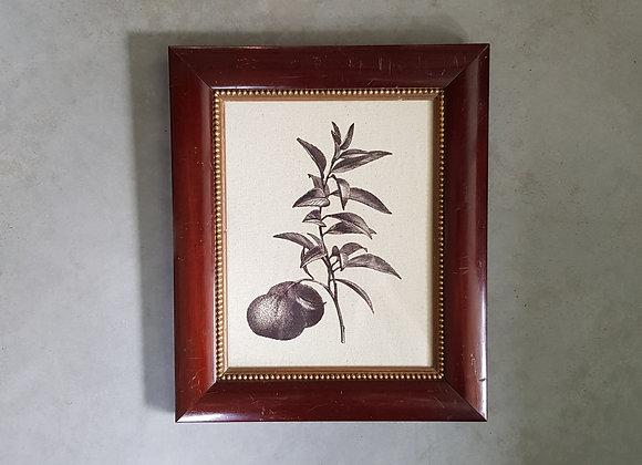 תמונת ענף פרי הדר