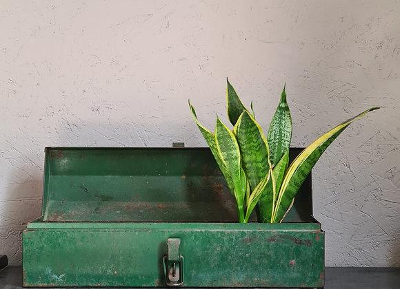 ארגז פח ירוק