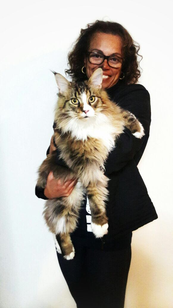 Brown Tabby Classic White