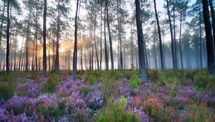 Comment notre belle région landaise inspire l'art de vivre en harmonie