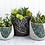 Thumbnail: Apatite Medium Planter