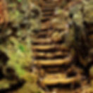 old-forest-steps-dean-harte_edited.jpg