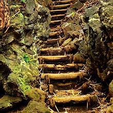 old-forest-steps-dean-harte_edited.jpg