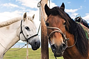 white-and-brown-horse-861x574.jpg