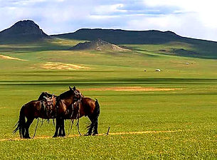 mongol mori_edited.jpg