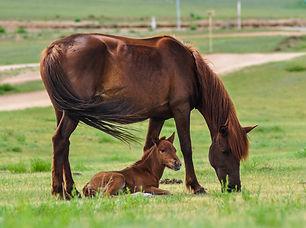 horse-2504677.jpg