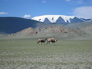 mongolia-590800.jpg