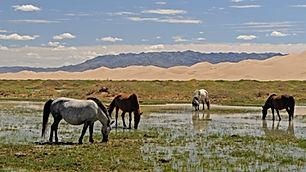 mongolia-3046030.jpg
