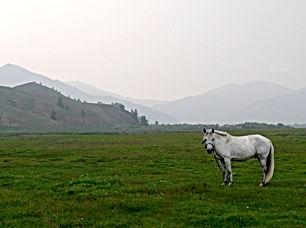 mongolia-831276.jpg