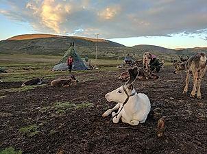 #Taiga #nomadictrips.jpg