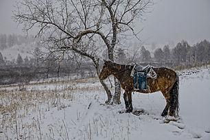 in-the-winter-2316038.jpg