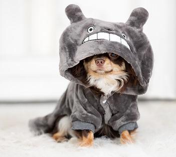 Puppy in Pyjama