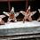 Thumbnail: Starfish