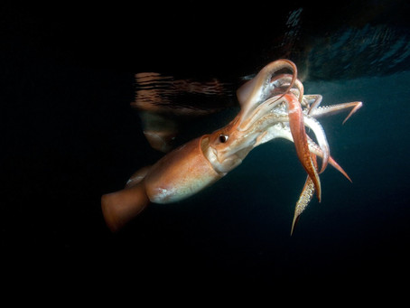 The New York Times analyzes the Giant Squid panorama of the Region