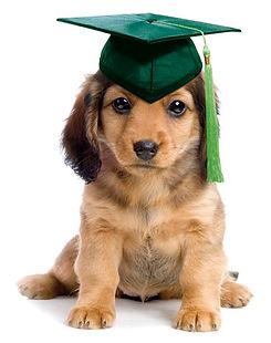 GX PuppySchool Graduate.jpg