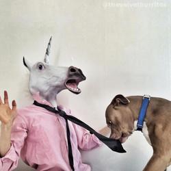 Murph vs the Unicorn