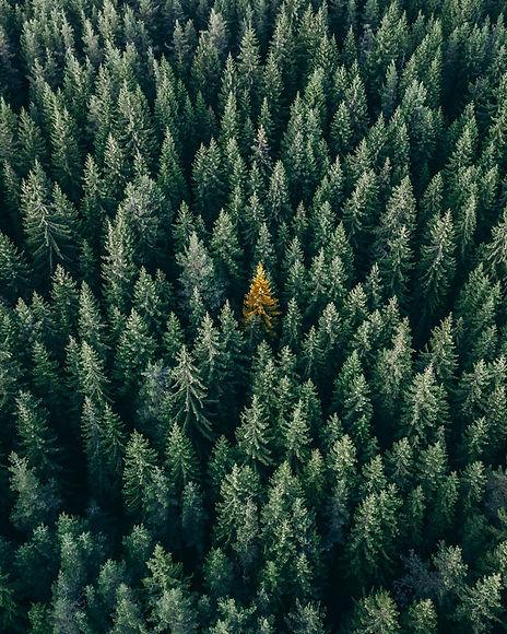 Svensk skog_small.jpg