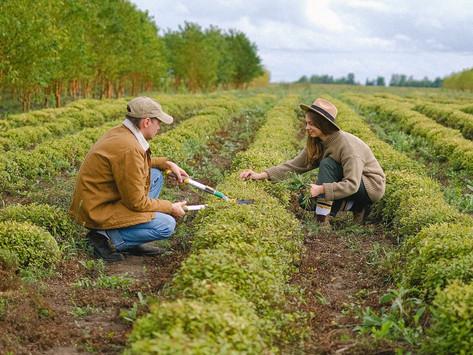 Der Kampf der deutschen Bauern