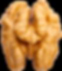 B-Nusshirn-ISS_13619_05401.png