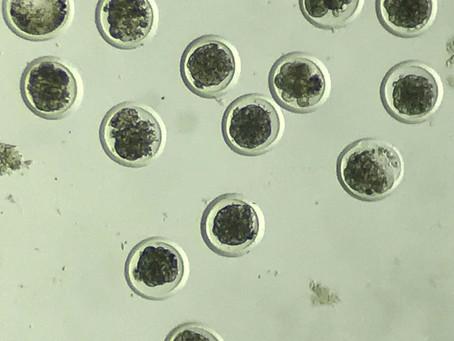 Biotecnologías aplicadas a la reproducción en el ganado bovino