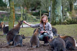 Anna's Welsh Zoo