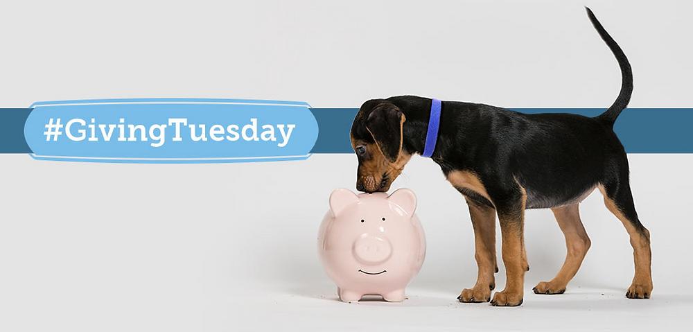 Break the bank already!  Giving Tuesday!